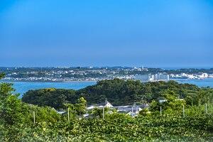横須賀エリア
